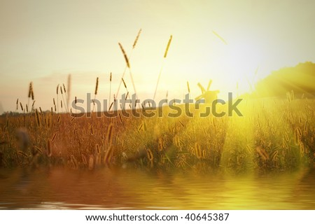 field on sunset with water reflection