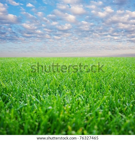 Field over blue cloudy sky
