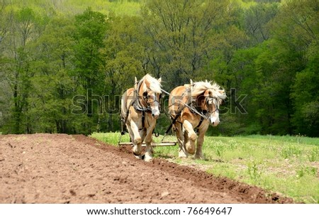 Field plowing with horses - stock photo