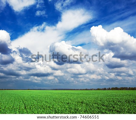 Field summer landscape. Grass and sky - stock photo