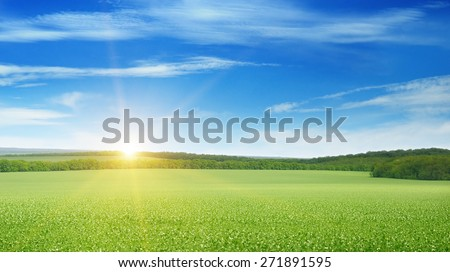 field, sunrise and blue sky - stock photo