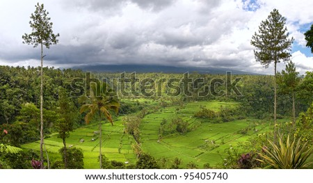 field terraces and mount Agung, Bali - stock photo
