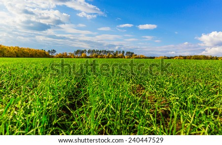 Field, the autumn landscape shoots - stock photo