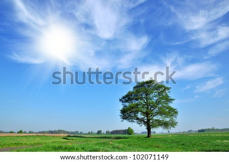 Field,tree and blue cloudy sky