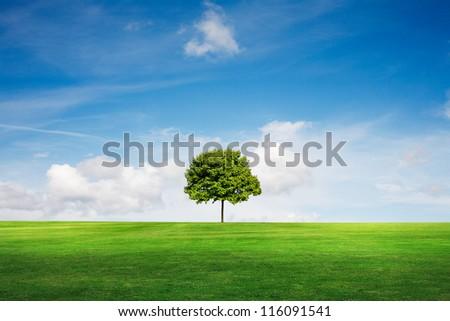 field tree and blue sky - stock photo