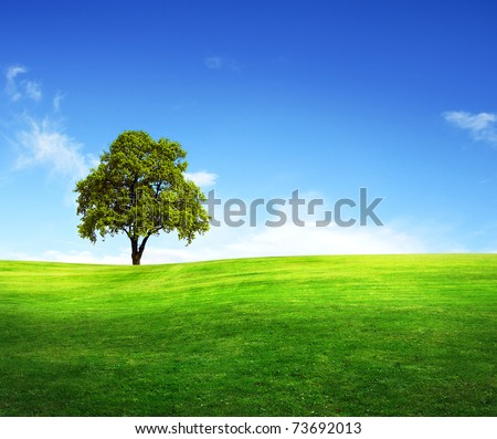 Field,tree and blue sky - stock photo