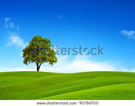 field, tree and blue sky - stock photo