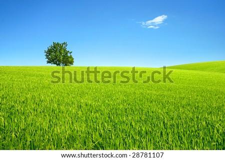 Field, tree and sky. - stock photo