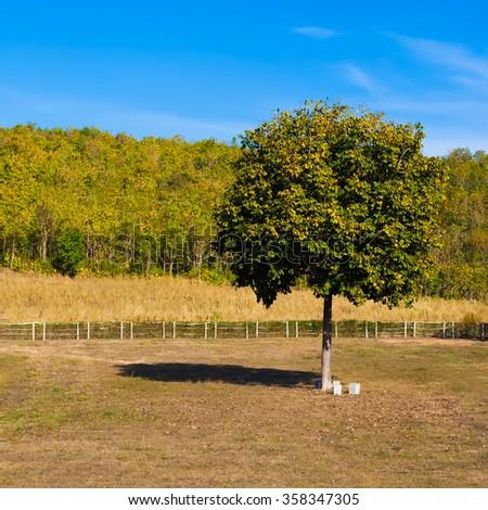 Field,tree, mountain and blue sky - stock photo