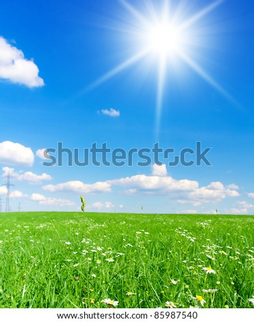 Field Wallpaper Landscape
