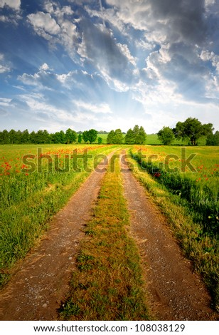 Field way in the sunset - stock photo