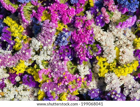 Field wild flowers colorful background - stock photo