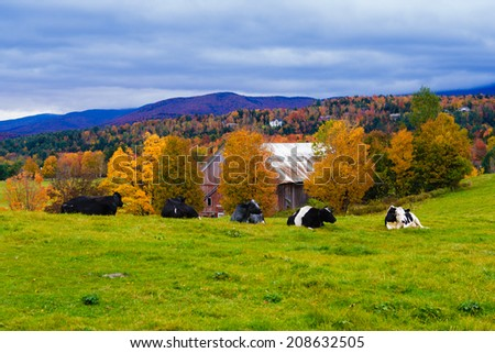 Field with a couple of cows, Stowe, Vermont, USA - stock photo