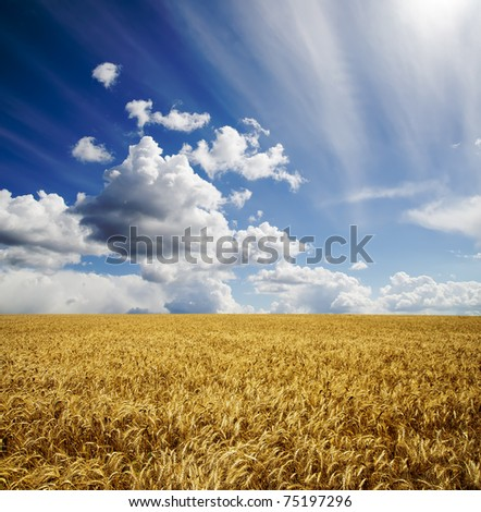field with barley under cloudy sky - stock photo