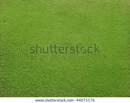 Field with beautiful green grass - stock photo