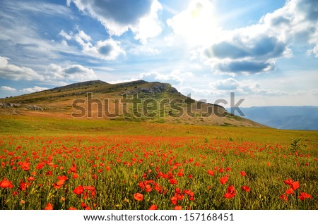 field with blooming poppies in the mountains. natural composition - stock photo