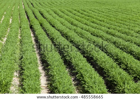 Field with carrot