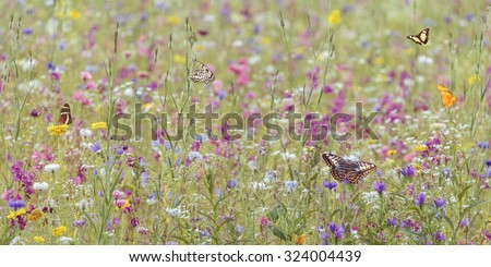 Field with colorful blooming wild spring flowers and butterflies - stock photo