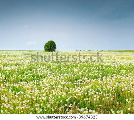 Field with dandelions and alone tree under sky - stock photo