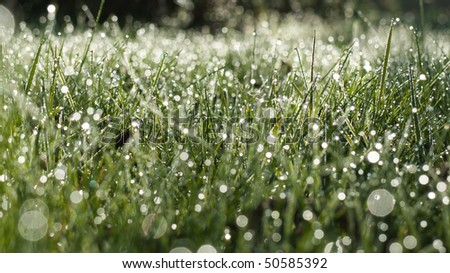 Field with dew - stock photo