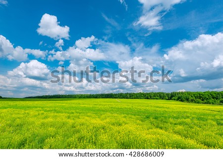 Field with flowers at hot day summer time. - stock photo