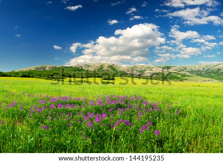 Field with flowers. Beautiful summer landscape
