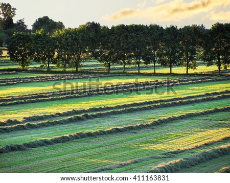 field with fresh cut grass on sunset  - stock photo