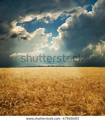 field with gold ears of wheat under hole in dramatic sky - stock photo