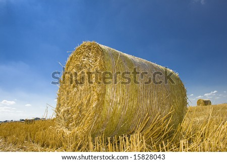 Field with golden hay bale