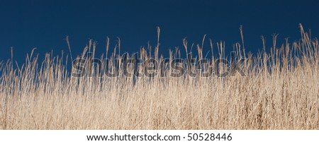 Field with golden weat - stock photo