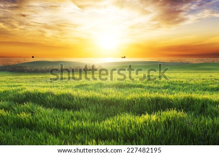 field with green grass against the sunset sky. - stock photo