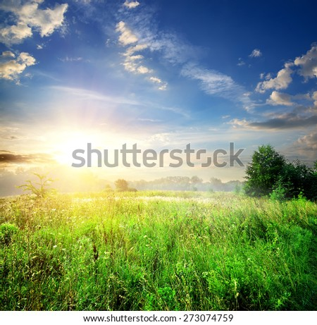 Field with green grass in summer forest