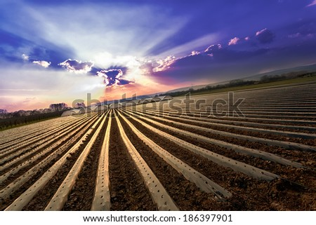Field with greenhouses on the horizon - stock photo
