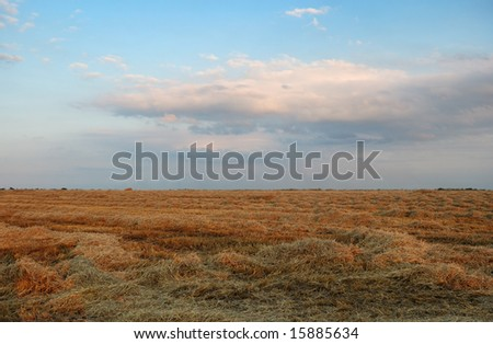 Field with hay