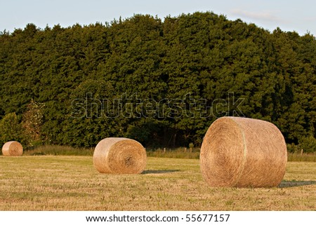 field with hay bale - stock photo