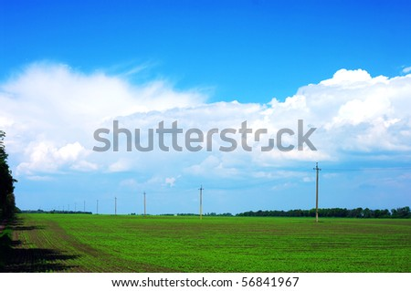 Field with intensive farming with blue sky