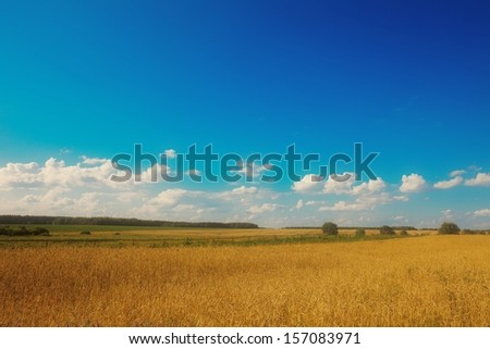 field with sky - stock photo