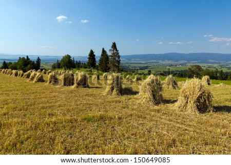 field with some bundles of hay on blue sky background - stock photo