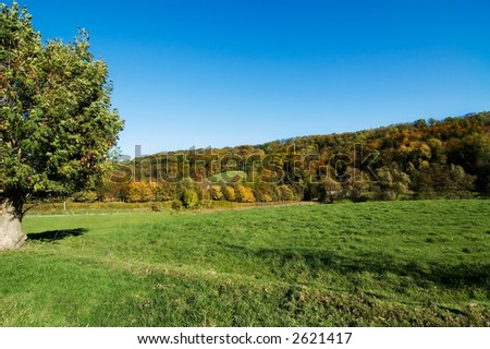 Field with tree - stock photo