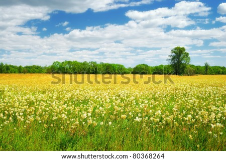 field with white and yellow flowers in summer day