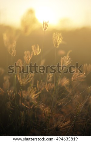 Field with wild grasses at sunset. Selective focus. Beautiful  landscape,Cross process and soft flare filter