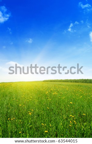 Field with yellow wildflowers and bright summer day. - stock photo