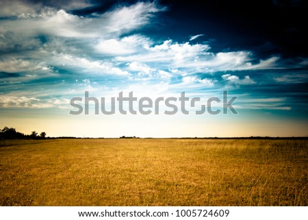 Field yellow and blue sky in summer day