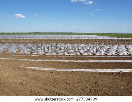 field young watermelon covered with nylon - stock photo