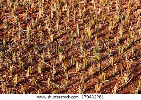 fields after harvest - stock photo