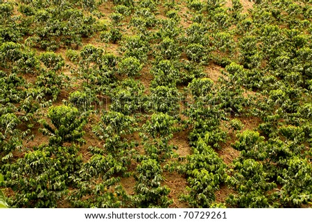 Fields and coffee plantations in the Colombian Andes. Montenegro, which is nestled between mountains of the Cordillera Central, in Colombia. Zone of high quality coffee, - stock photo