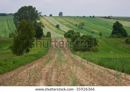 Fields and meadows landscape
