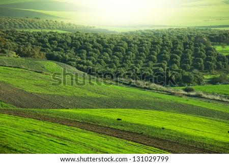 fields in Morocco - stock photo