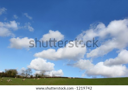 Fields in spring with sheep and lambs, set against a blue sky with clouds. - stock photo