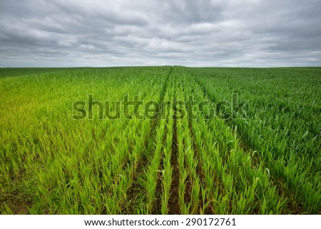 Fields in the countryside. Germany, Plafz - stock photo